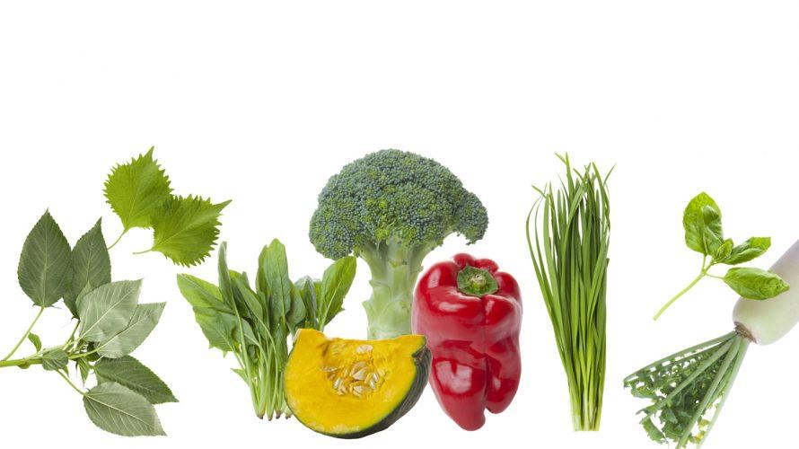 アンチエイジングに重要な栄養素